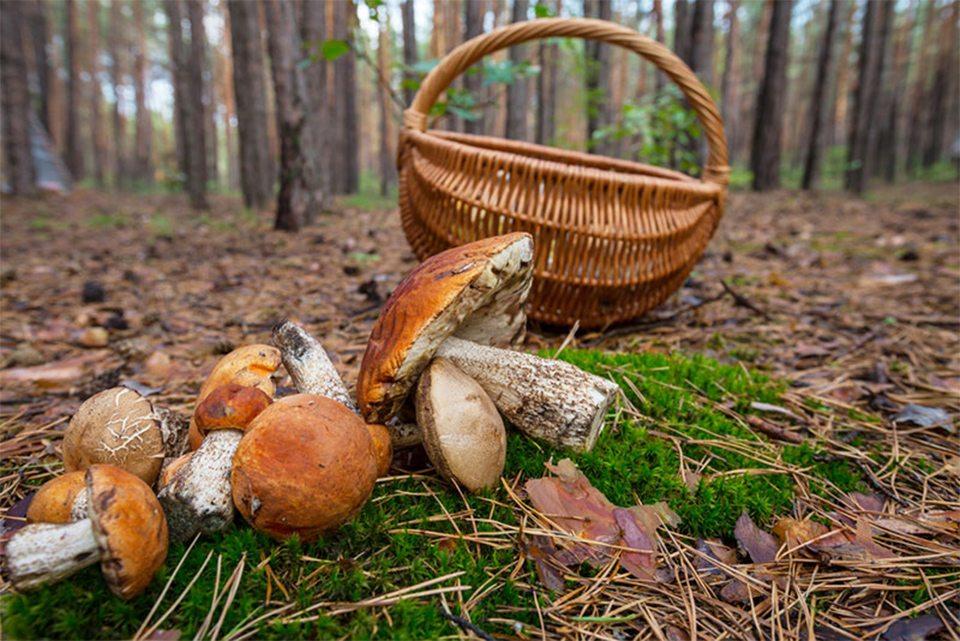 На Херсонщине с отравлением грибами в больницы попадают целые семьи