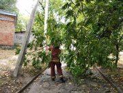 """В Херсонской области 8 тысяч человек остались без света из-за неизвестных """"лесорубов"""""""