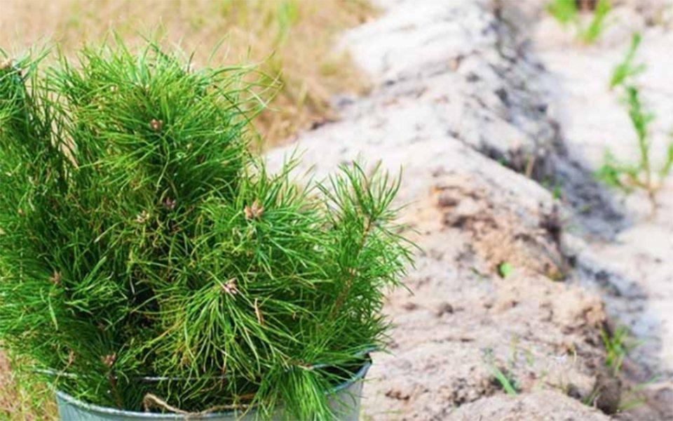 На Херсонщине денег на деревья не хватает