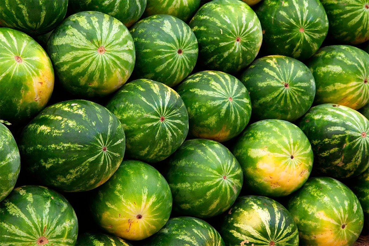 Гарний врожай на баштанах Херсонщини