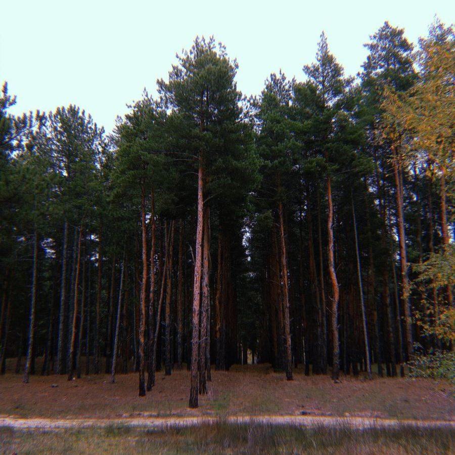 зниклі, ліс, гриби