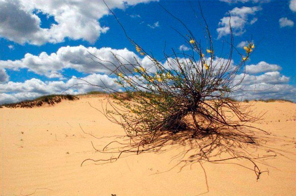 В пустыне на Херсонщине коронавирус не опасен