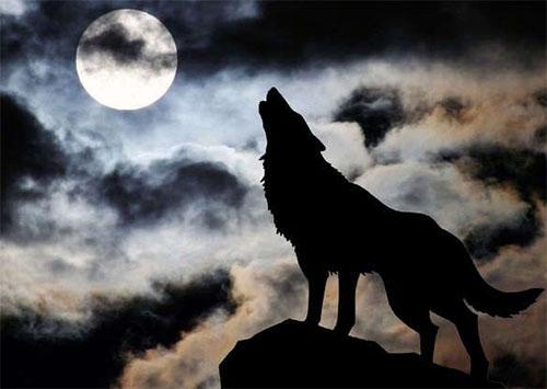 К селам Херсонщины подбираются волки
