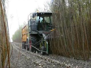 Альтернативне паливо вирощуватимуть на Херсонщині