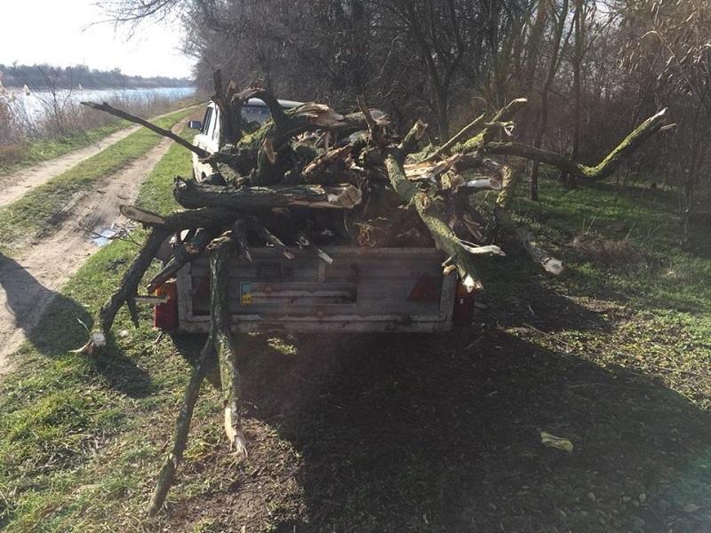Двом мешканцям Херсонщини загрожує 5 років за гратами за порубку дерев