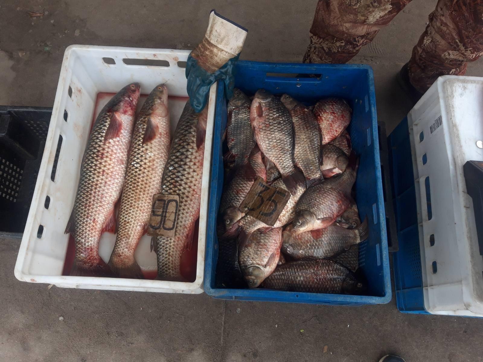 Херсонский рыбоохранный патруль задержал очередных браконьеров
