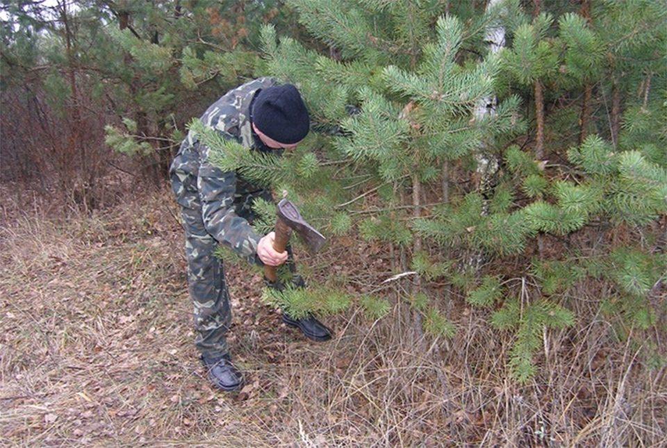 На Херсонщине защищают ёлки от браконьеров