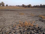 Посуха знову навідалася на Херсонщину