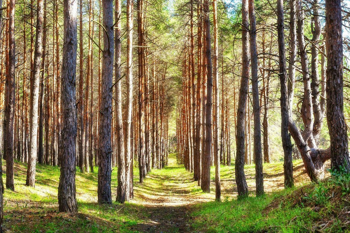 В Херсонской области появятся Казённый сад и Олешковский сосновый бор