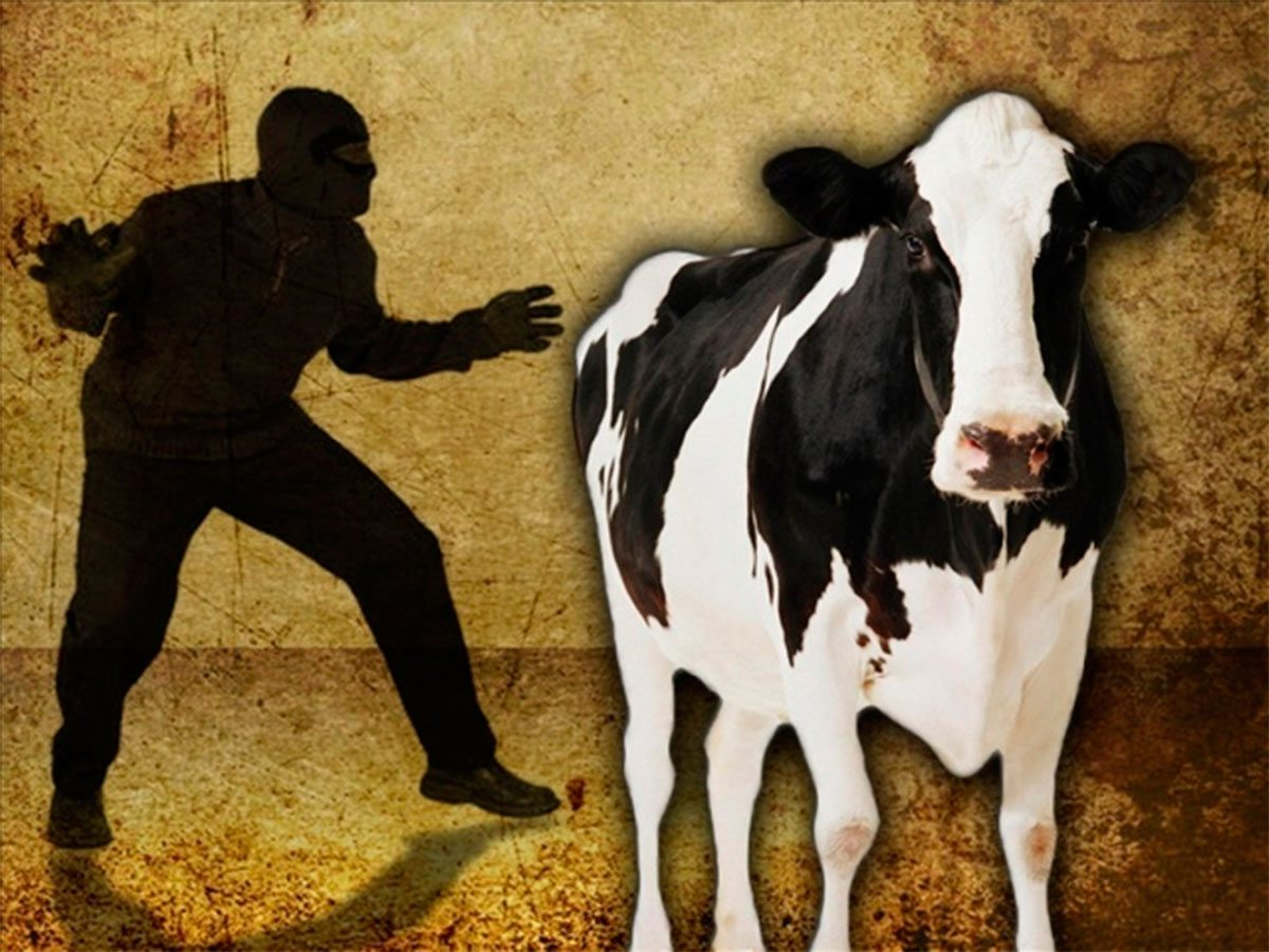 На Херсонщине в селе украли корову