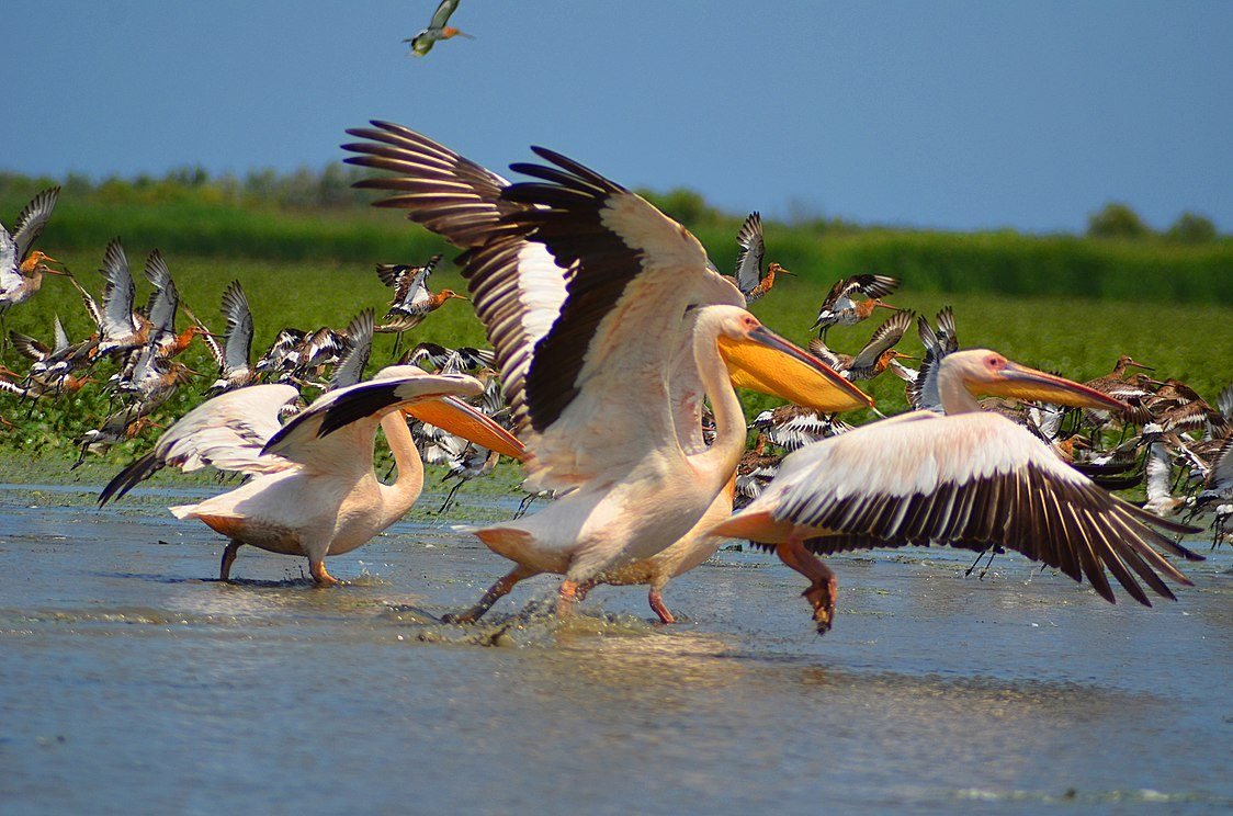 На Херсонщині залишились зимувати перелітні птахи