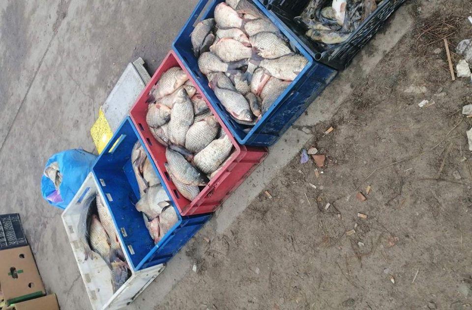 В Херсонскій області поліція припинила незаконний продаж риби