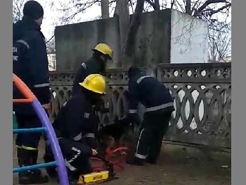 Каховские сотрудники ГСЧС спасли собаку от удушения