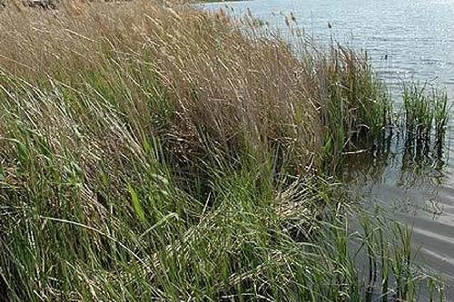 Пропавший в Херсоне парень найден утонувшим в реке