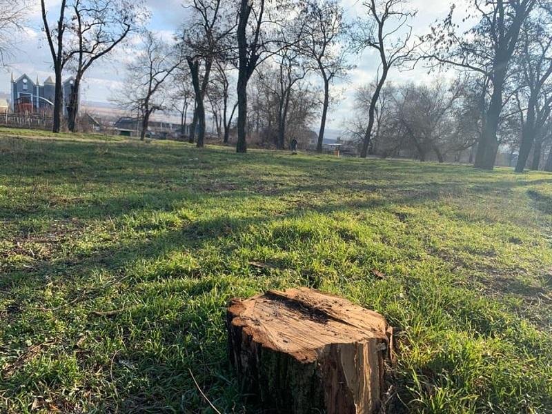 В Херсоне неизвестные вырубили парковые деревья