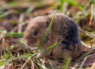 В некоторых районах Херсонщины грызуны уничтожили треть посевов
